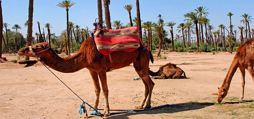 Comment préparer son voyage au Maroc? Guide complet