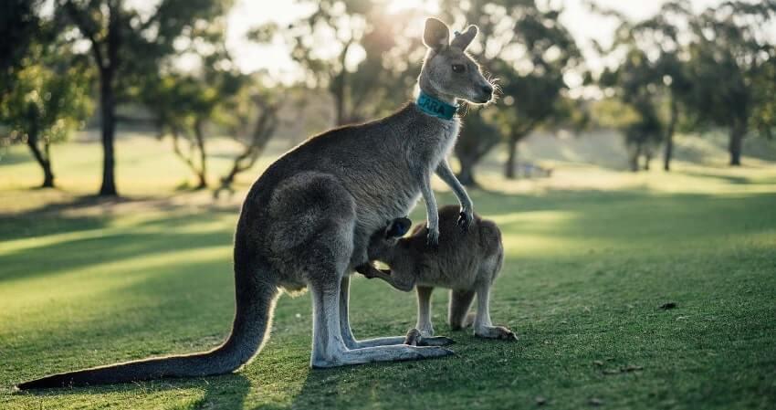 Comment préparer son voyage en Australie ? Guide complet